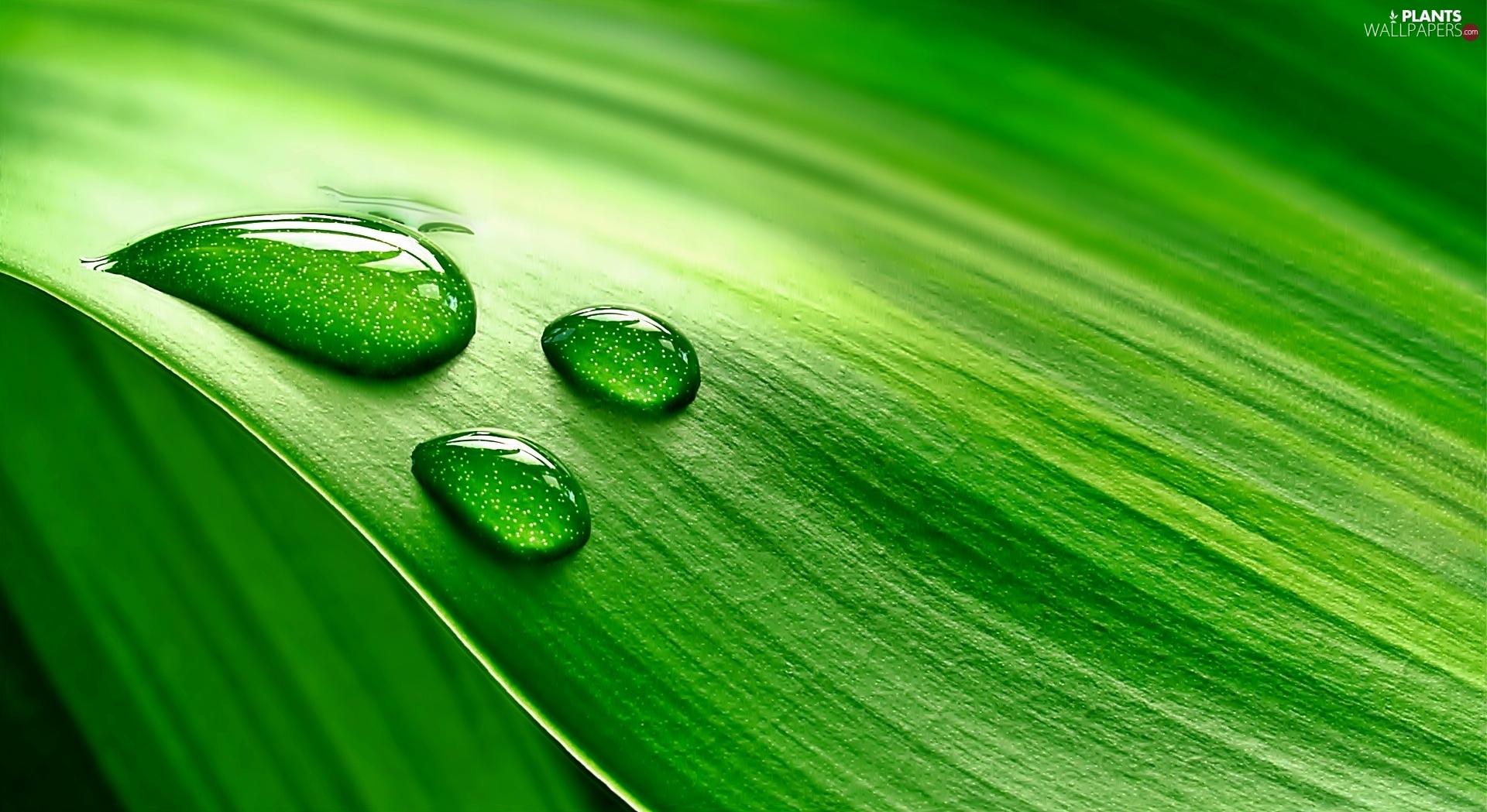 """Képtalálat a következőre: """"leaf water"""""""