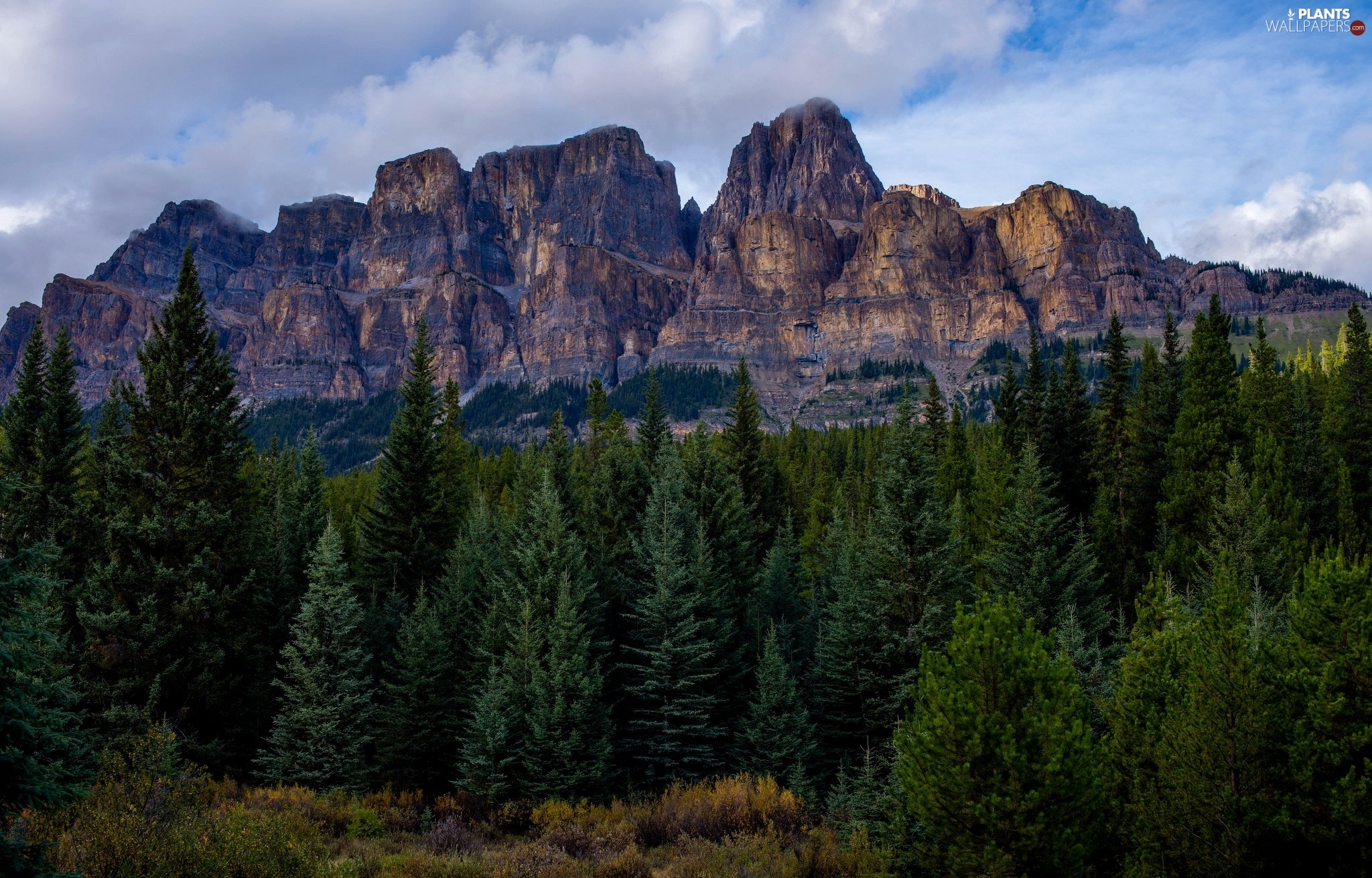viewes, forest, Castle Mountain, Canada, trees, Banff National Park, Mountains