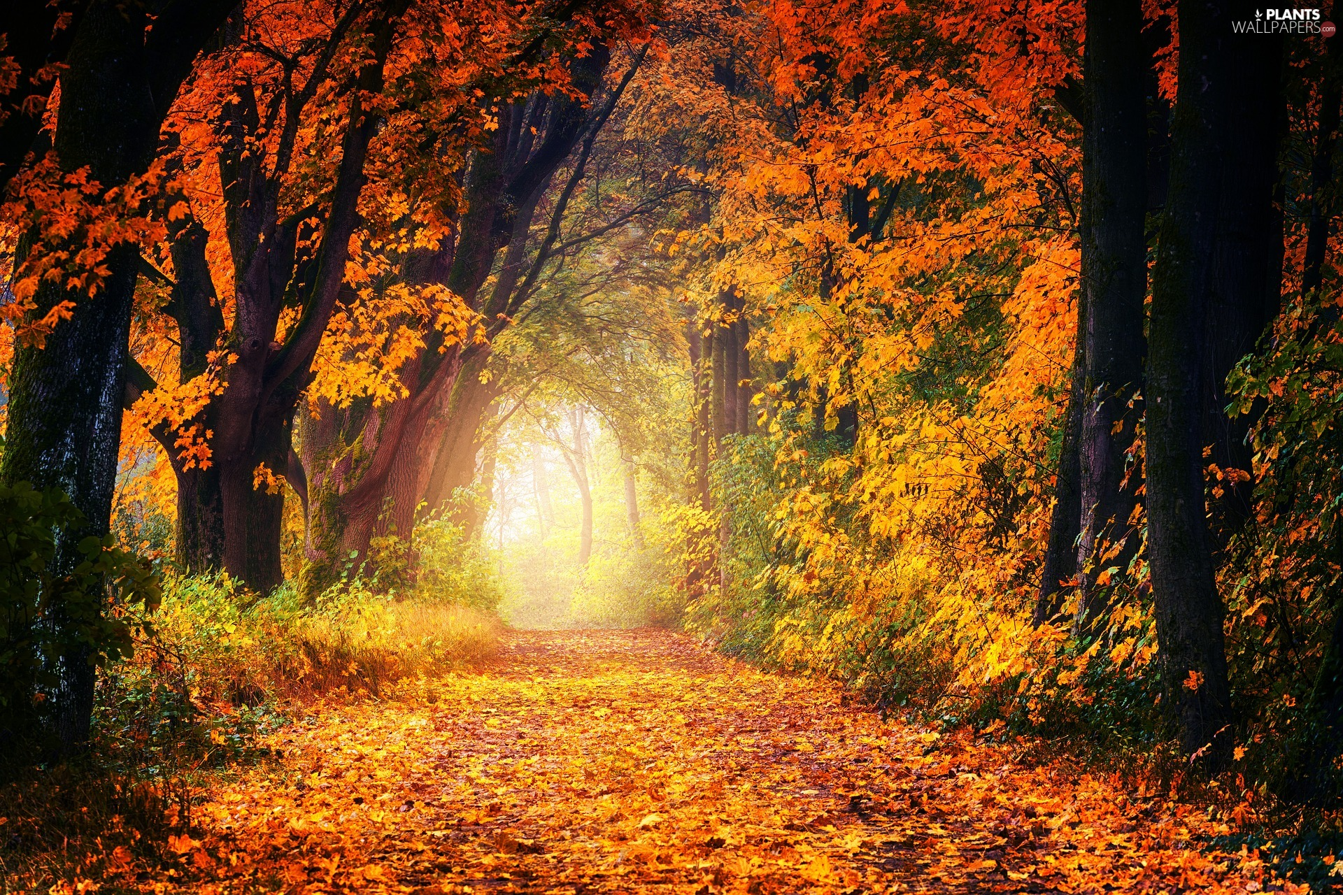 trees, autumn, forest, Plants, viewes, Way