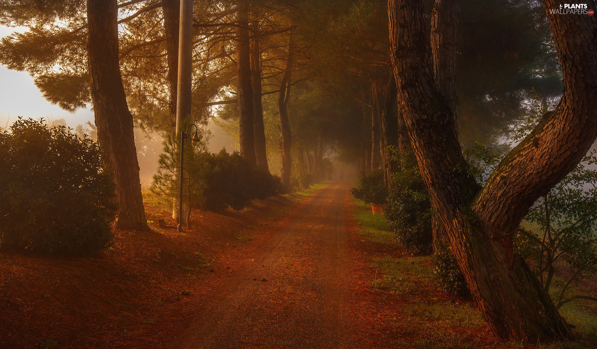 Lighthouse, autumn, viewes, Fog, trees, Way