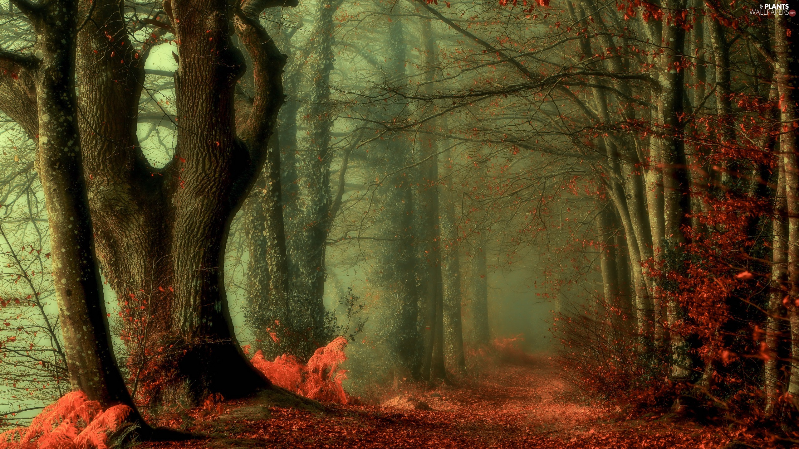 Fog, viewes, trees, autumn, Leaf, forest, Way