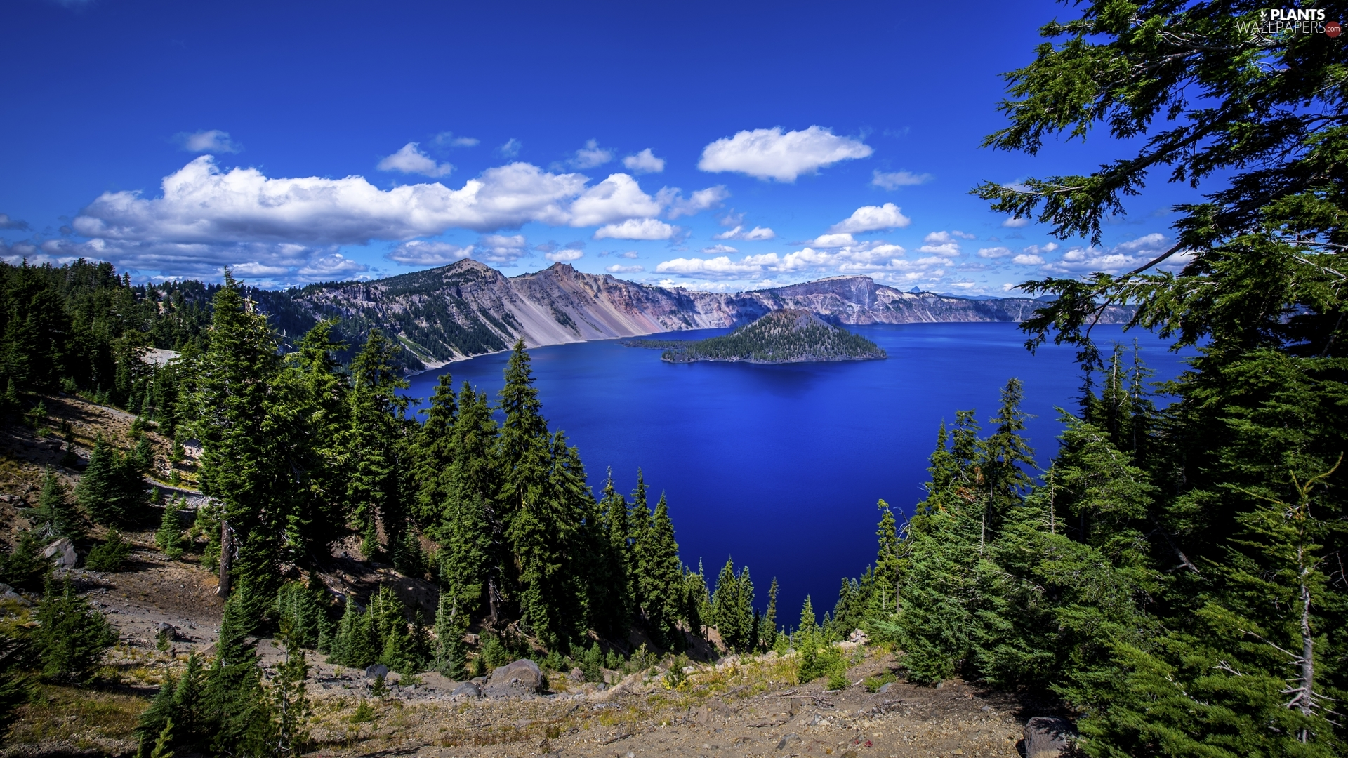 Crater Lake National Park, Crater Lake, viewes, Island of Wizard, trees, Oregon, The United States, Mountains