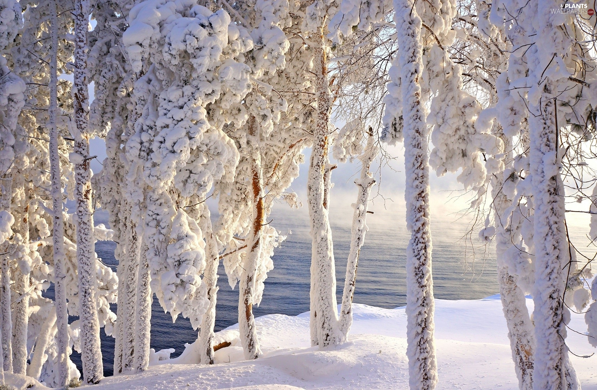 Snowy, viewes, water, trees
