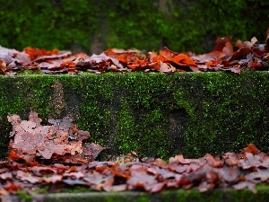 autumn, Moss, Stairs, Leaf