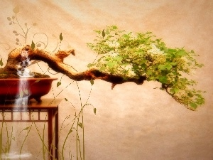 sapling, Bonsai, table