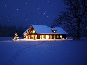 christmas tree, winter, Floodlit, house