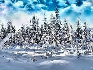 clouds, Spruces, winter, Snowy