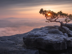 D???nsk? vrchovina, Lilienstein Mountain, Great Sunsets, pine, trees, Germany, Saxony, Fog, Saxon Switzerland National Park
