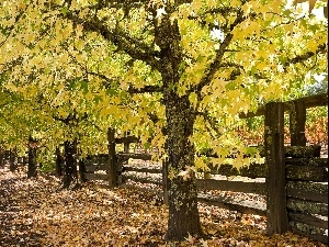 viewes, Way, fence, autumn, Leaf, trees