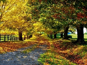 Hurdle, viewes, Field, Autumn, Path, trees