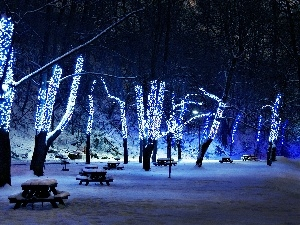 trees, Blue, lights, viewes