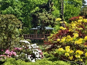 Rhododendrons, color, Park, arbour