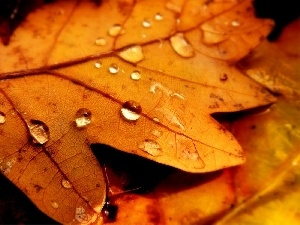 Rosy, drops, Yellow, Leaf