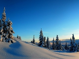 Spruces, Snowy, winter, Mountains
