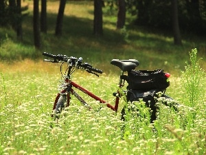 Bike, Flowers, Wildflowers, Meadow