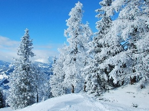 winter, Mountains, trees, viewes