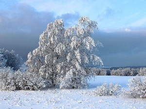 trees, snow, winter, viewes