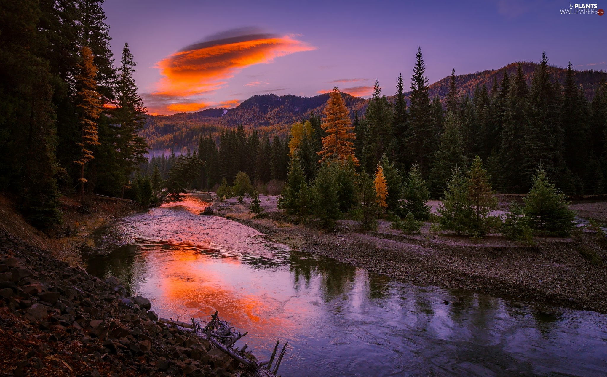 trees, River, forest, autumn, viewes, Mountains