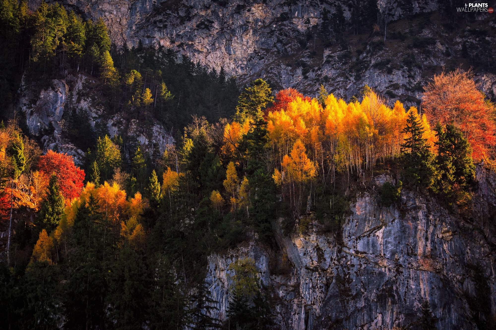 viewes, autumn, rocks, trees, Mountains