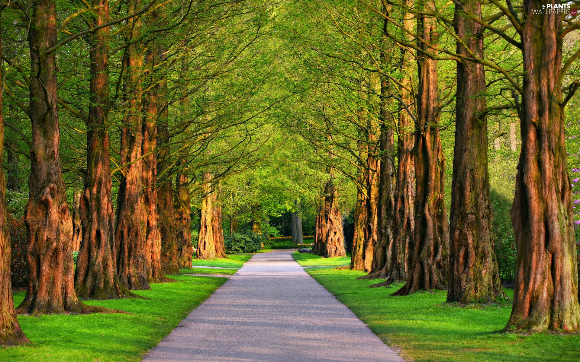 trees, summer, grass, Avenues, Park, viewes, lane