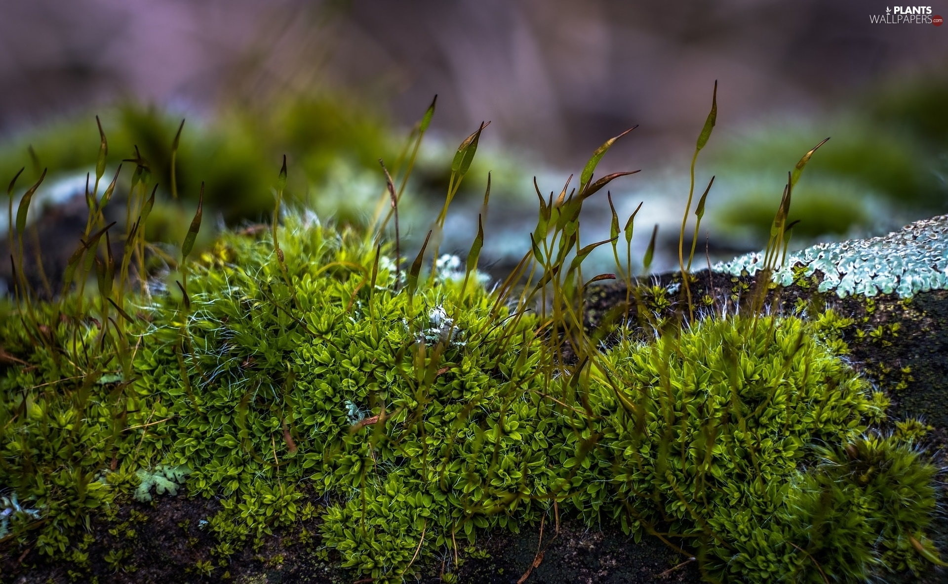 fuzzy, background, blades, Close, Moss
