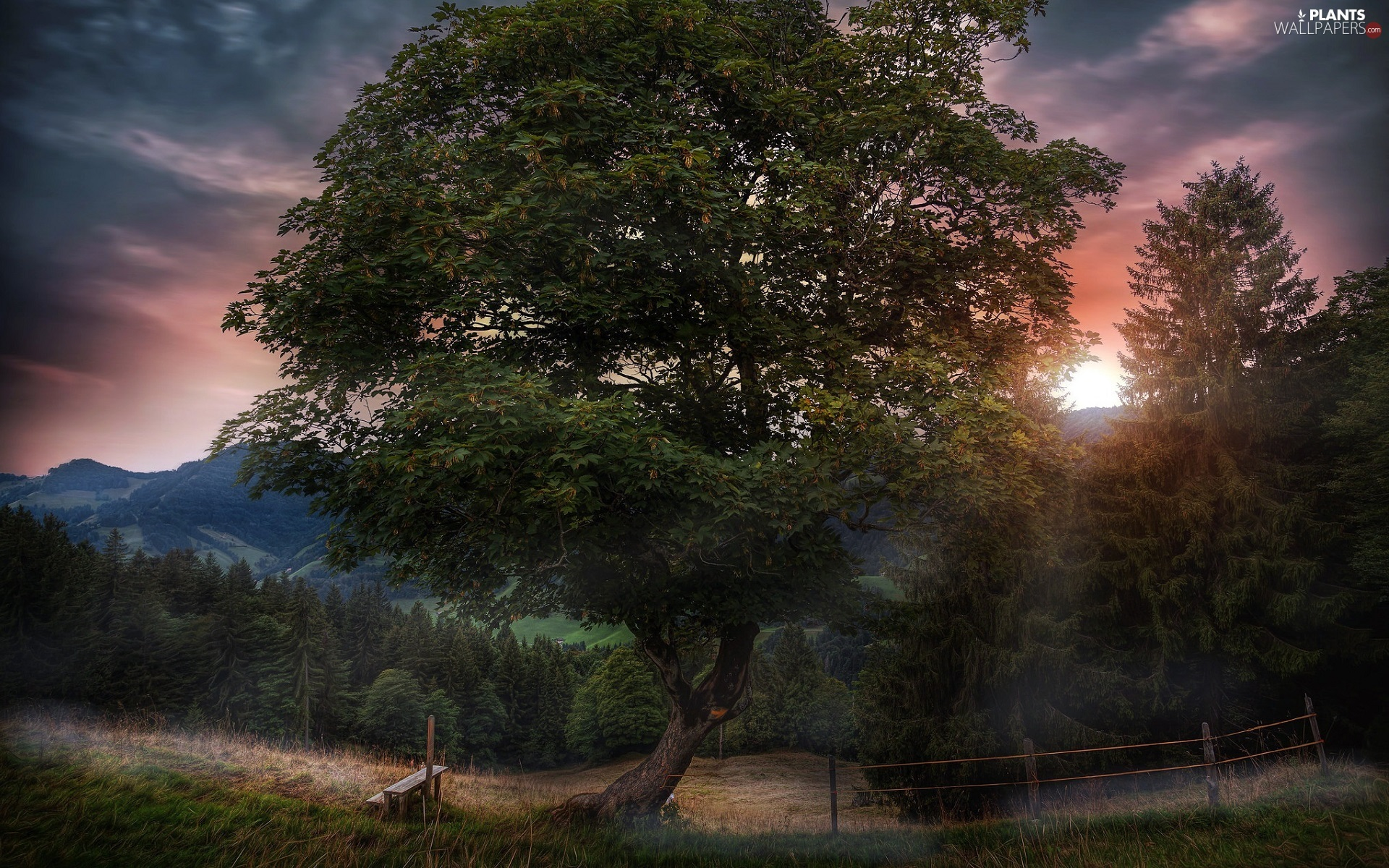 trees, Great Sunsets, Bench, fence, viewes, forest