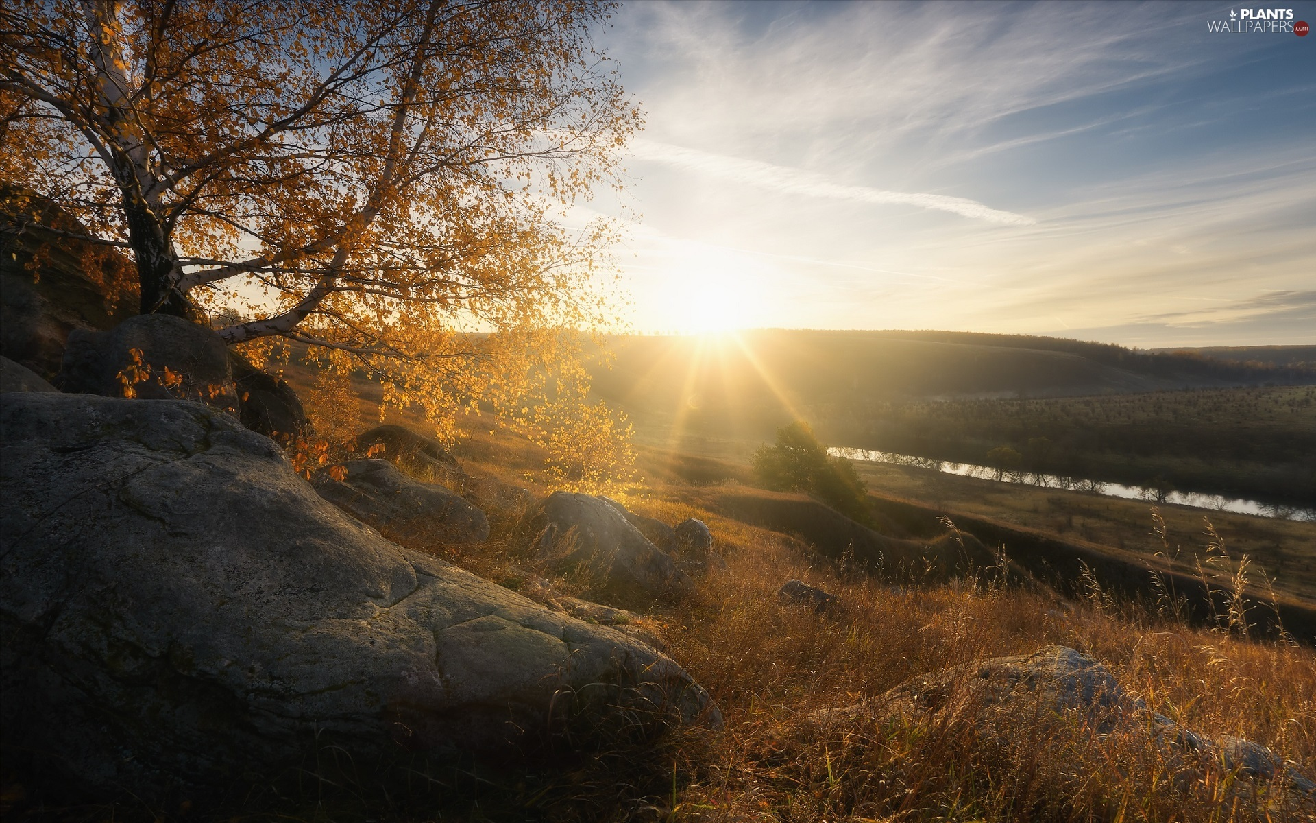 trees, rays of the Sun, Stones, The Hills, autumn, birch-tree, River