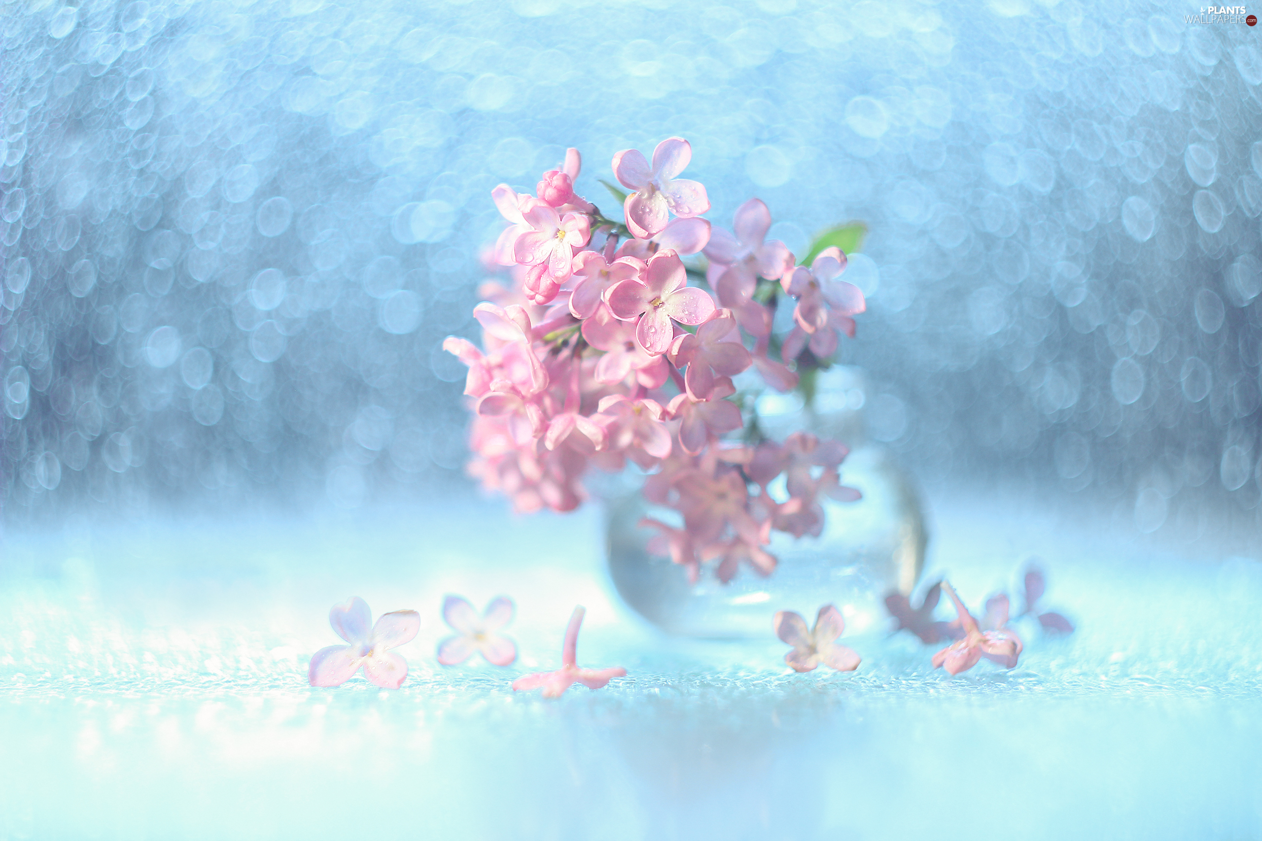 decoration, without, Bokeh, Pink