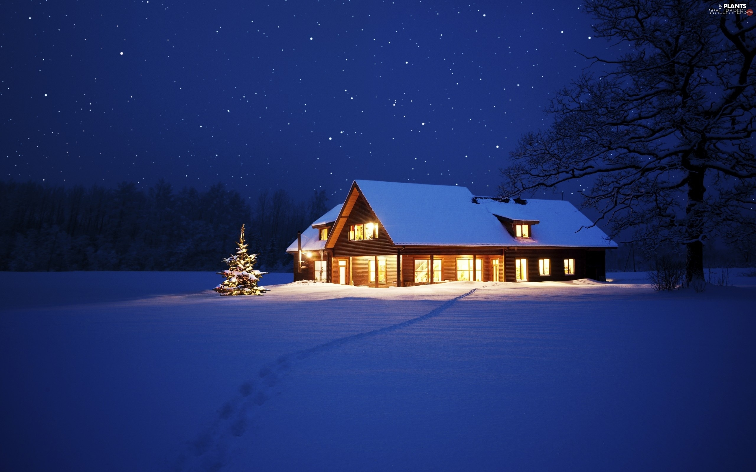 Floodlit, winter, christmas tree, house