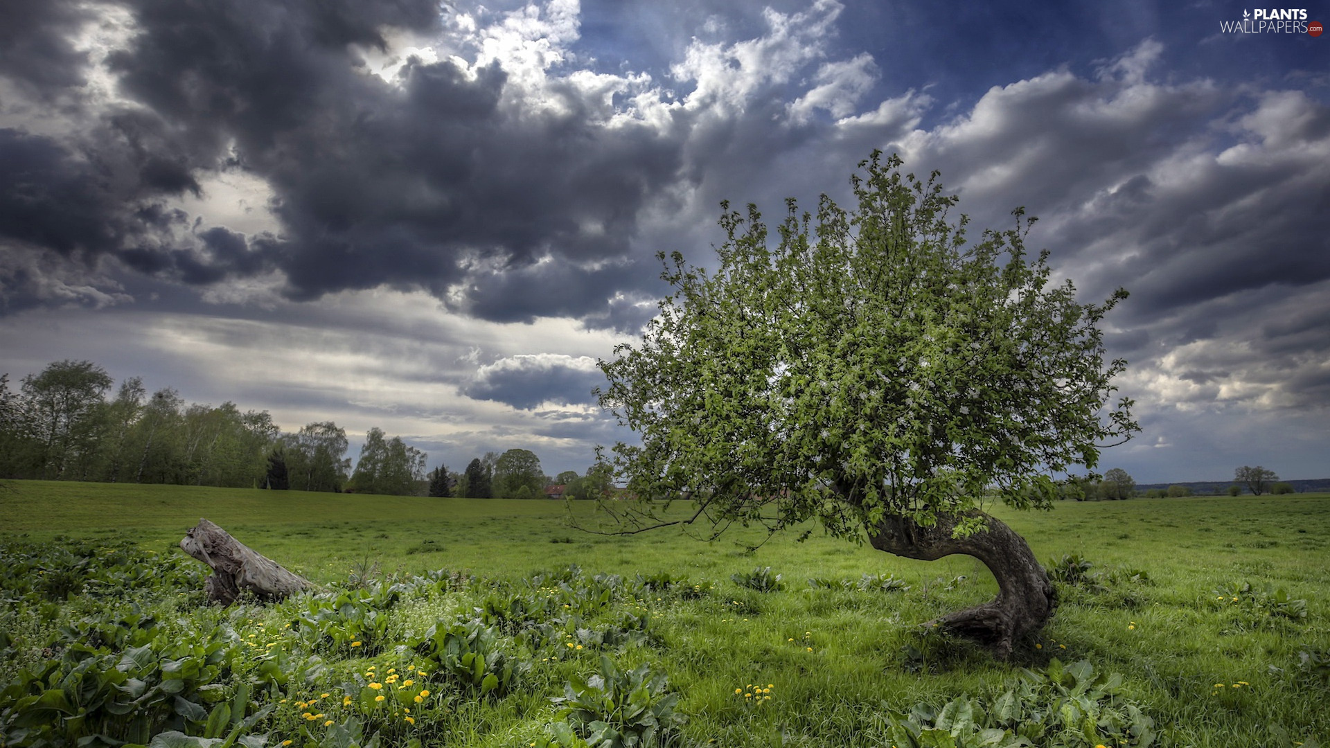 dark, Meadow, trees, clouds