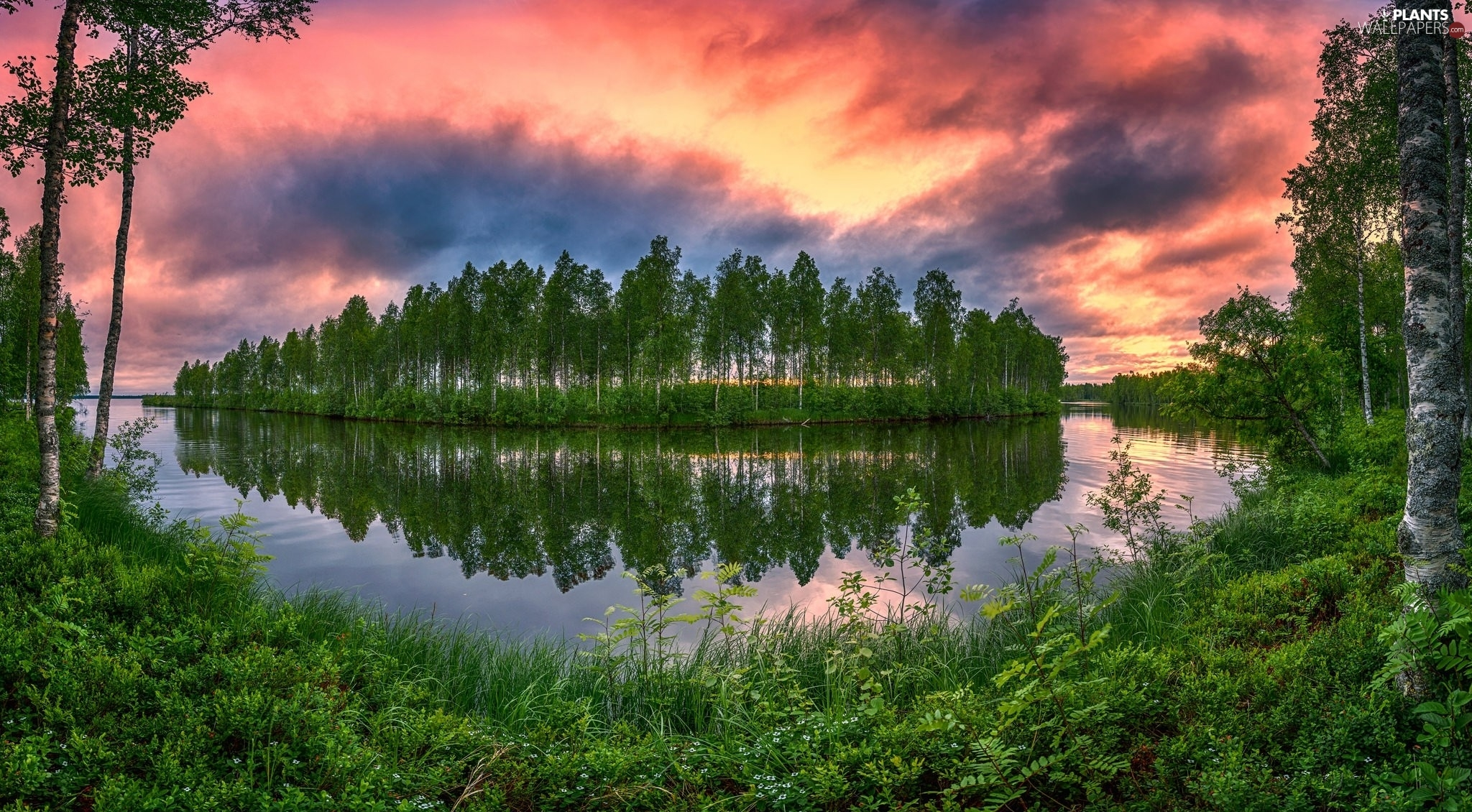 birch, trees, Great Sunsets, viewes, River, VEGETATION, clouds