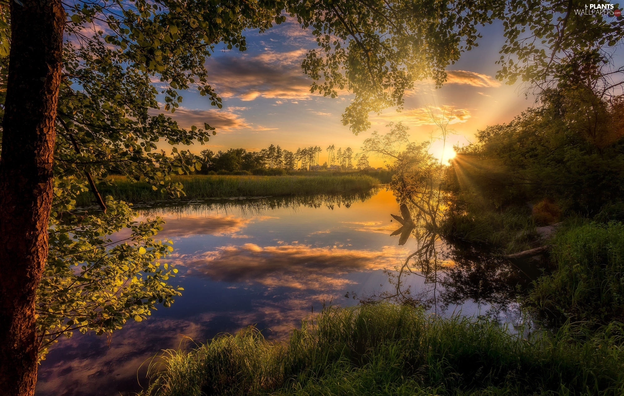 viewes, River, Sunrise, clouds, VEGETATION, trees