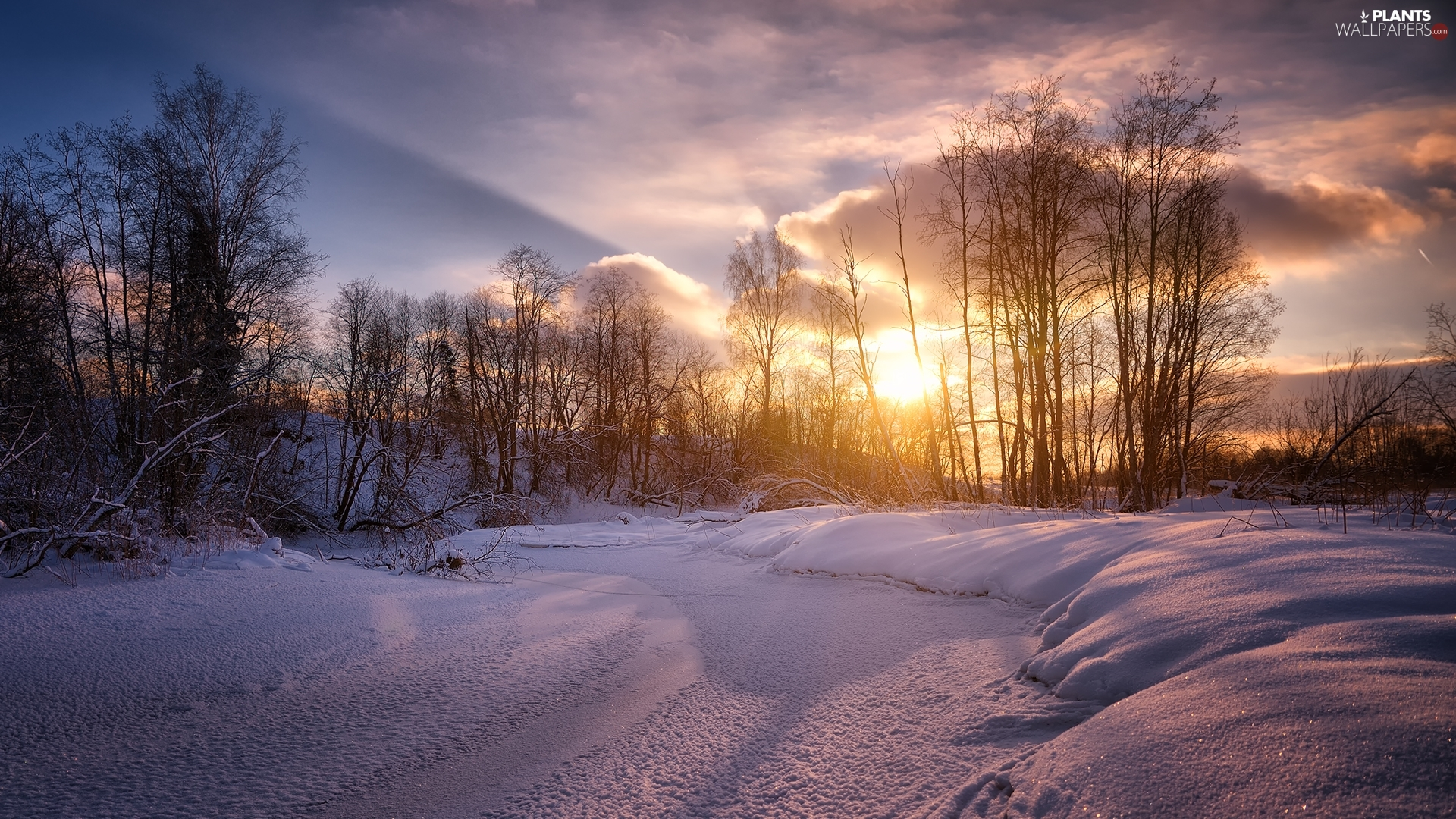 Sunrise, clouds, trees, viewes, winter