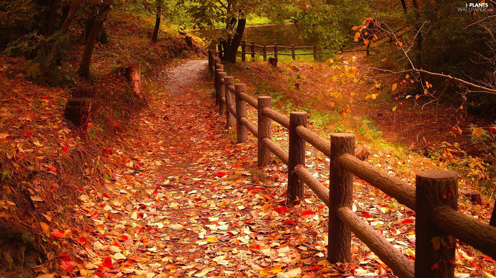 viewes, autumn, Way, fence, Leaf, trees