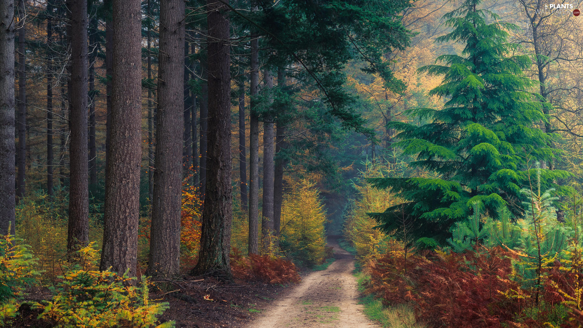 Way, autumn, trees, fern, forest, high, viewes