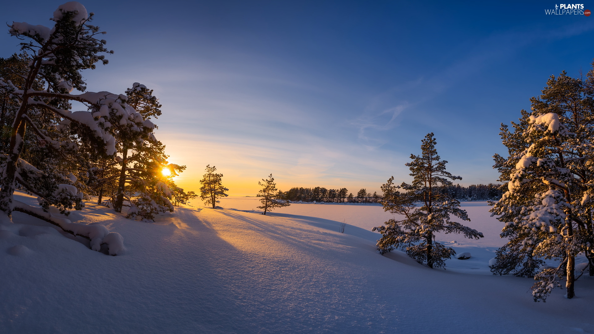 viewes, Snowy, cat, trees, winter, Great Sunsets, Finland