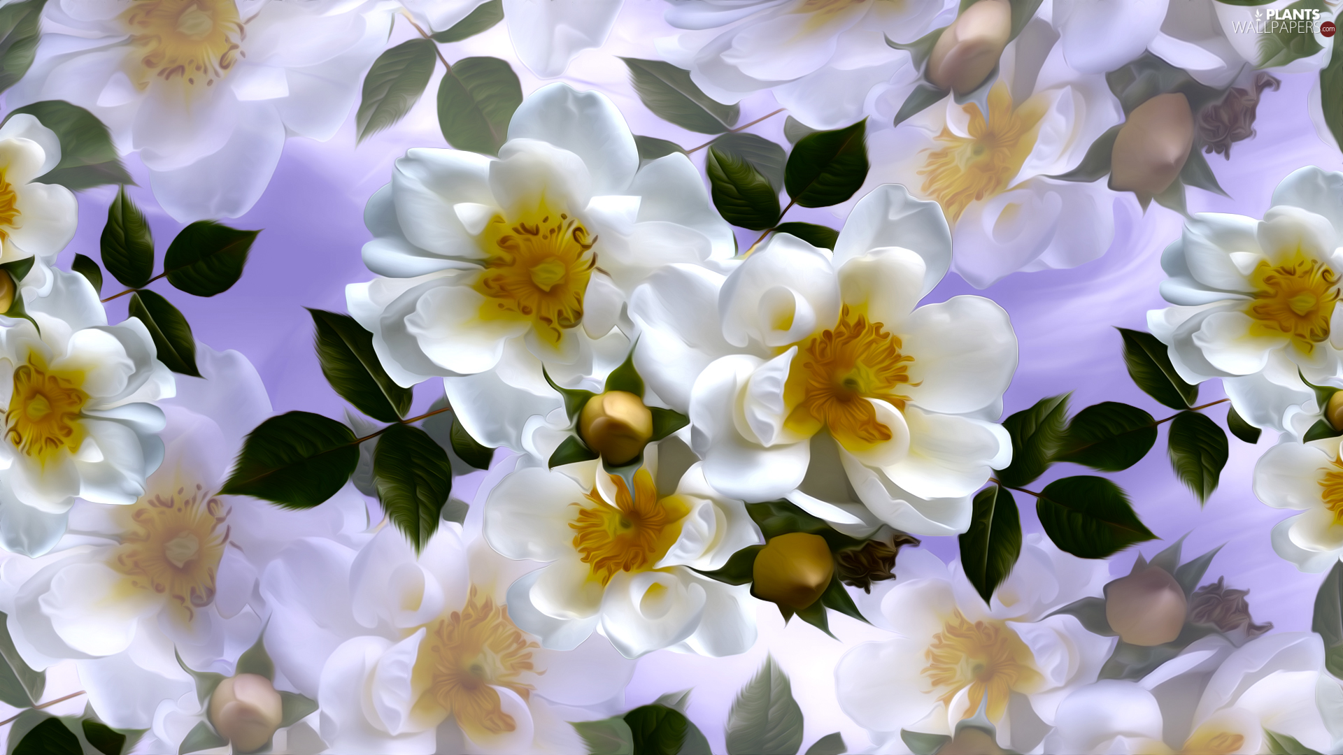 White, Briar, graphics, Flowers