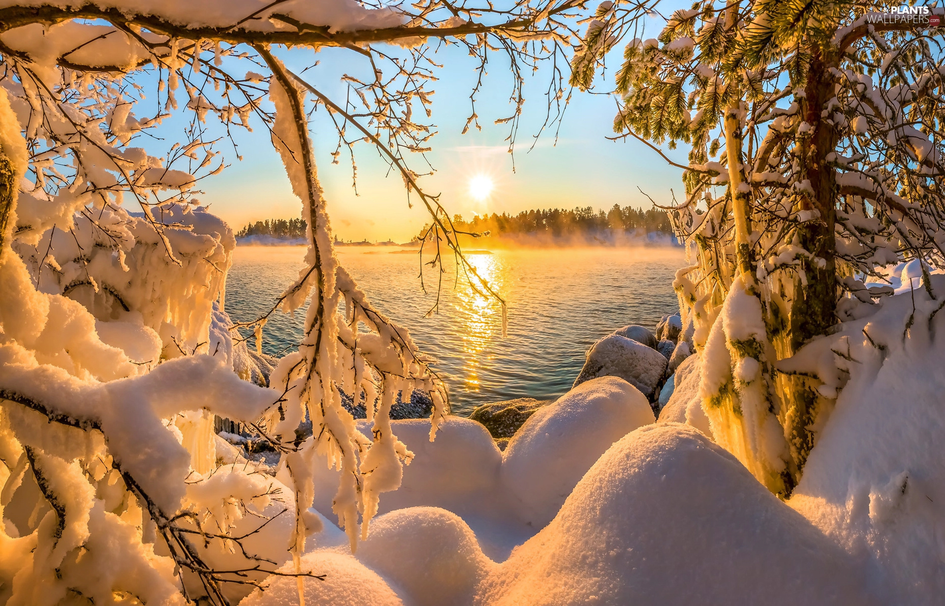 Great Sunsets, winter, Fog, forest, trees, branch pics, Snowy, lake, snow, viewes, Sky