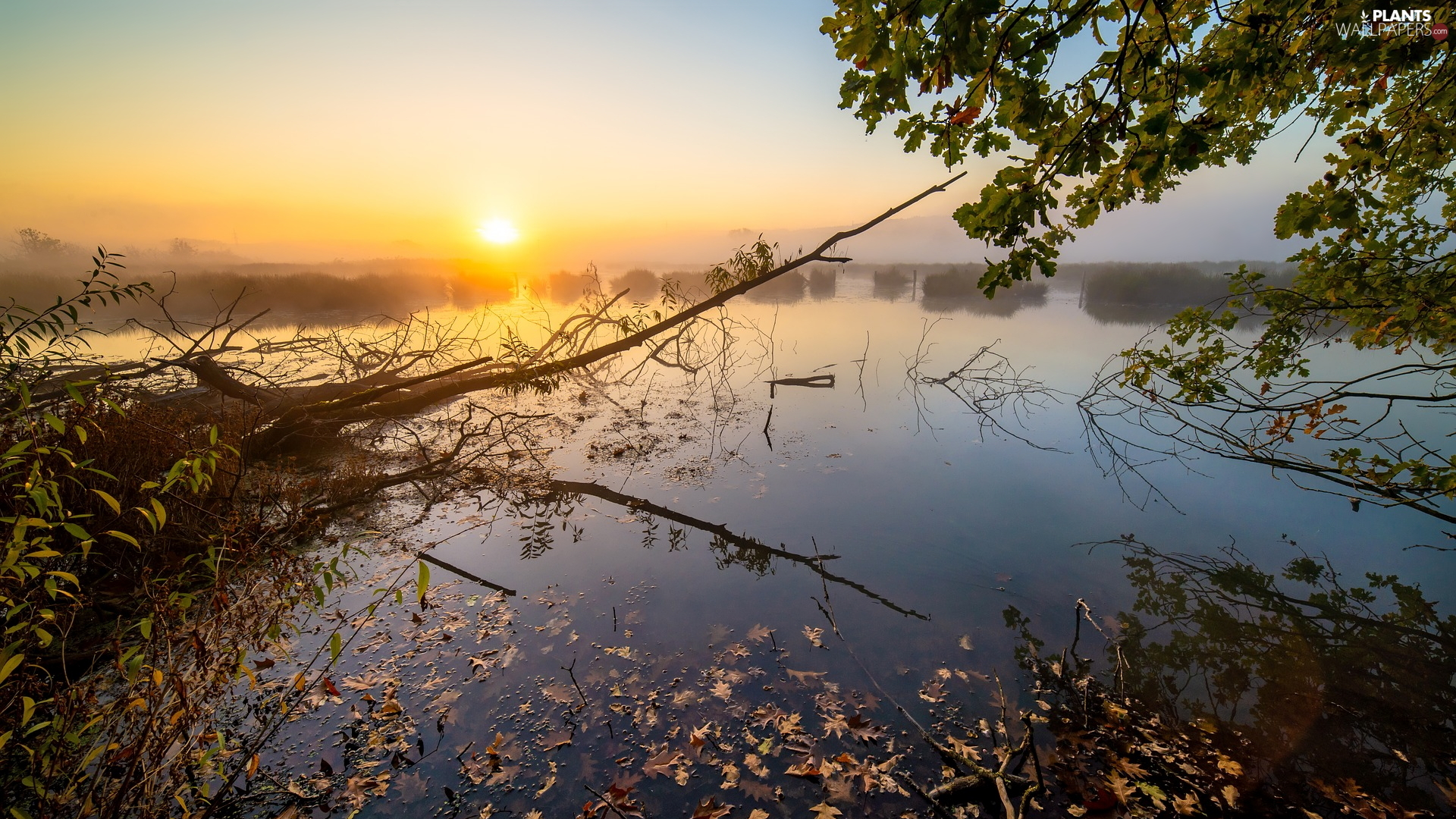 trees, branch pics, Fog, lake, Sunrise