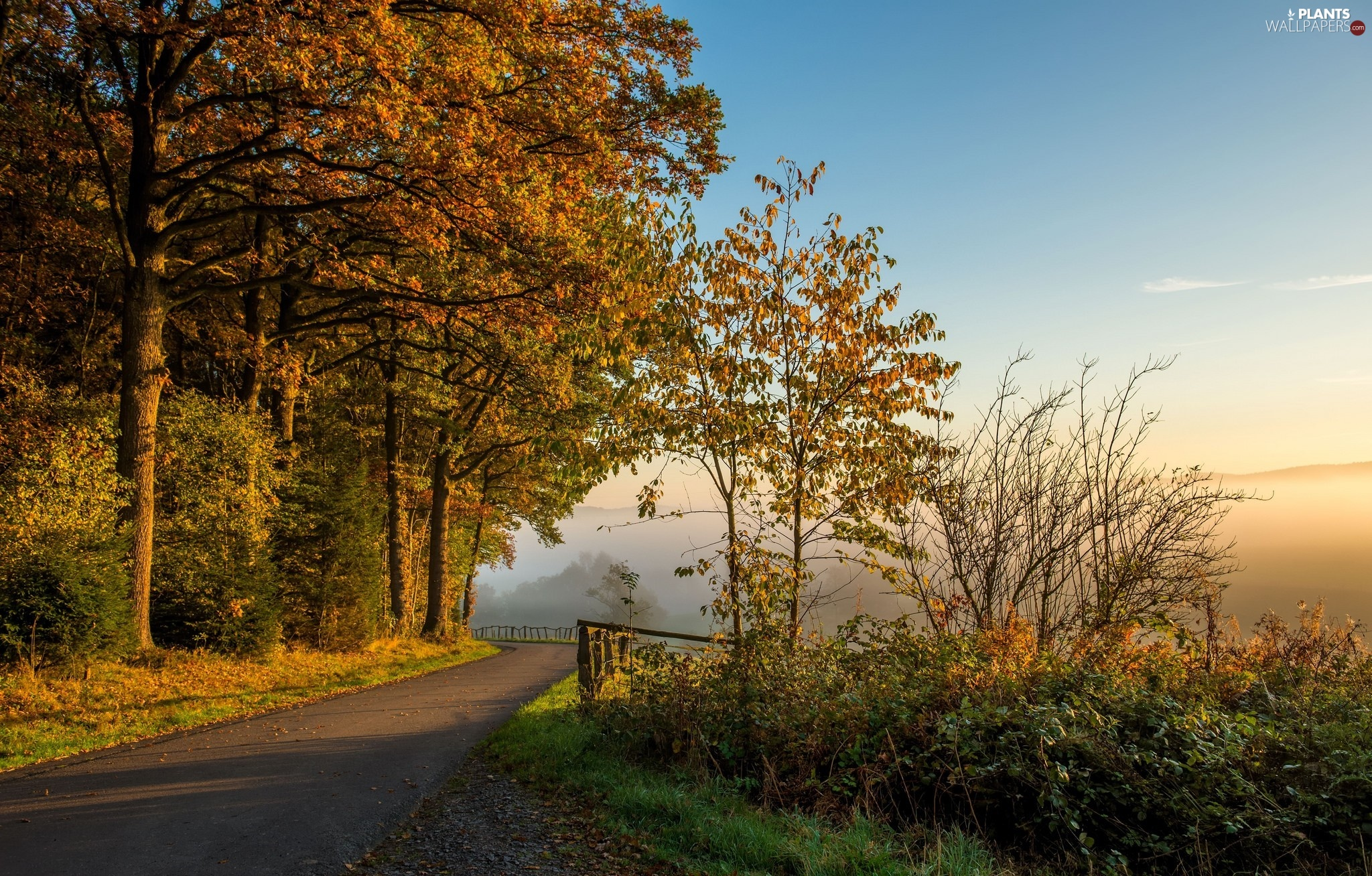 viewes, Way, autumn, Fog, morning, trees