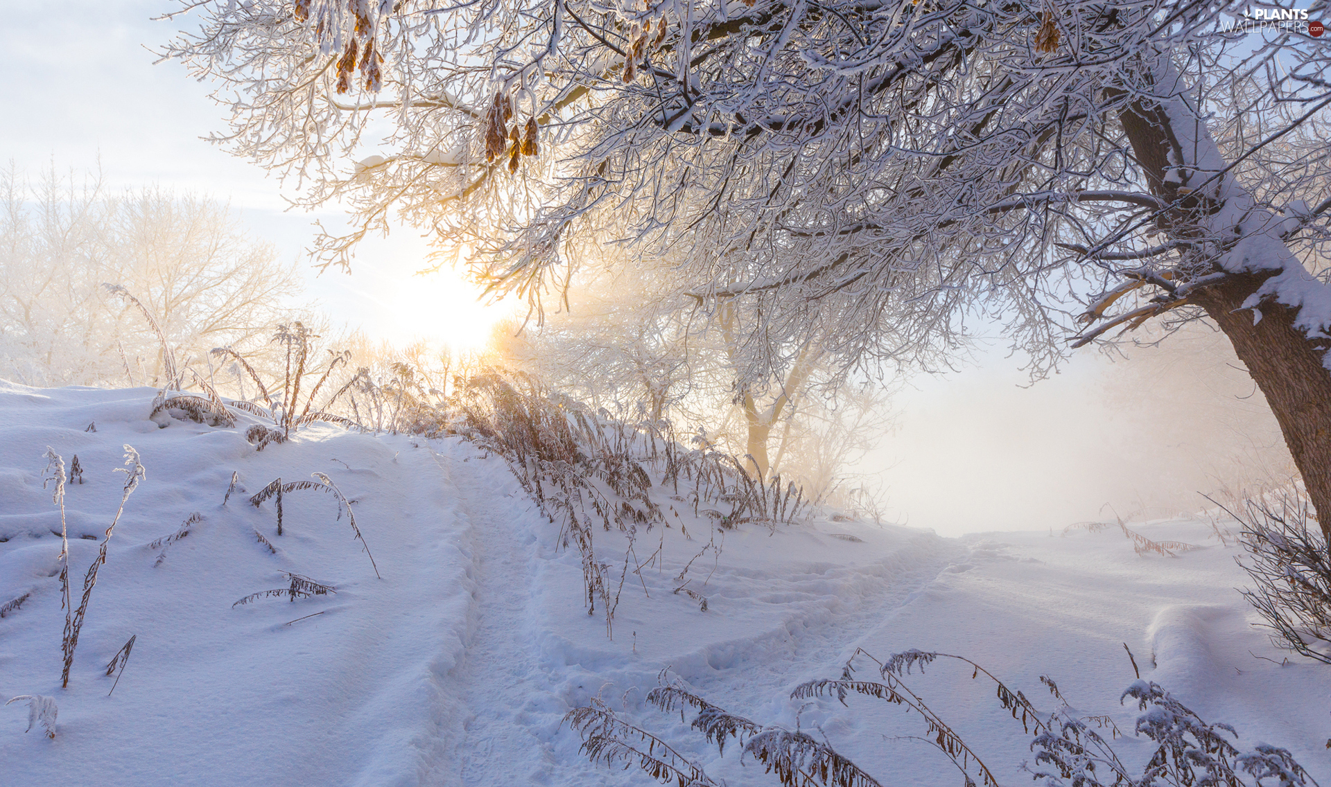 viewes, winter, sun, Fog, Plants, trees