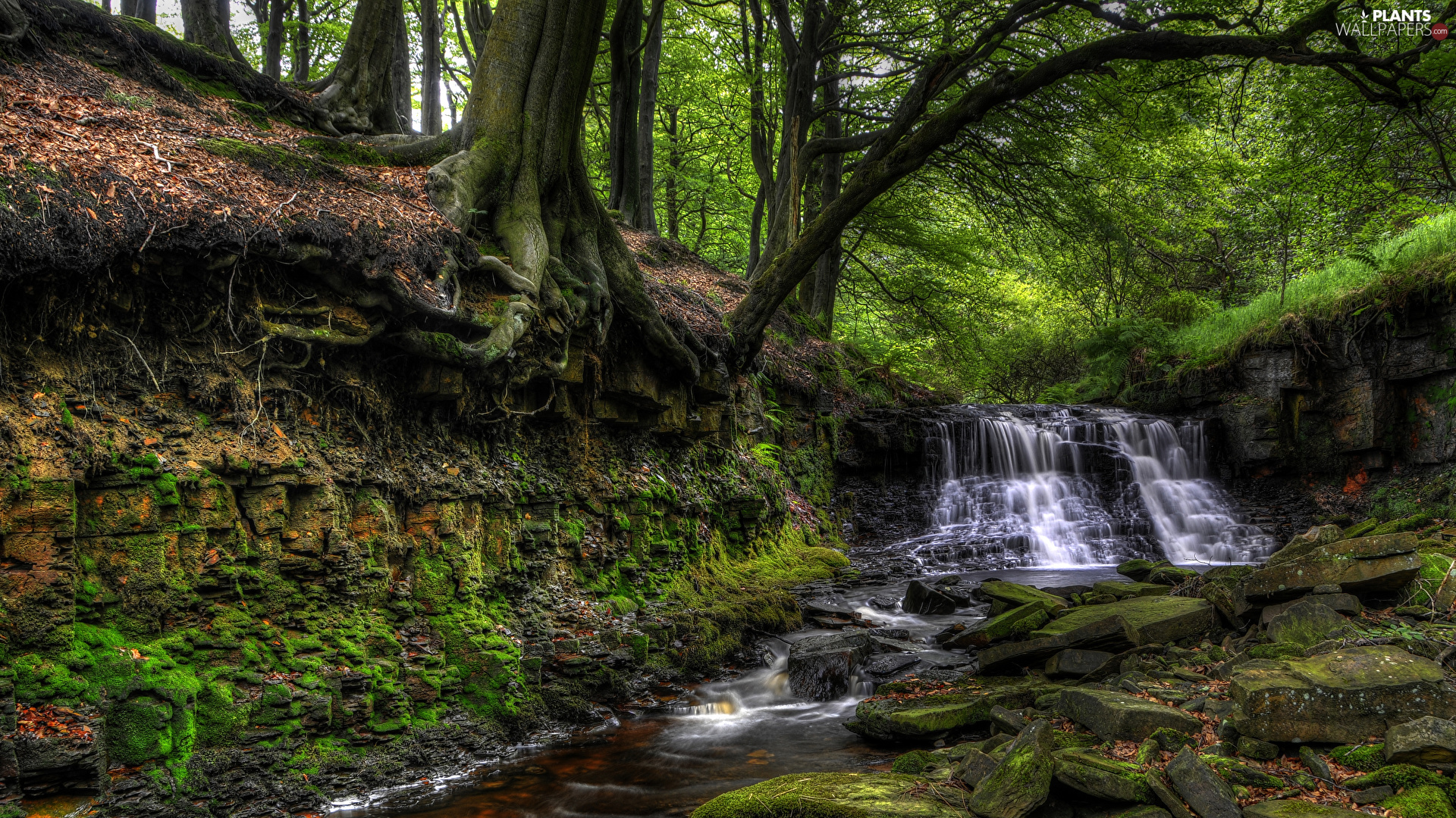 River, mossy, viewes, Stones, trees, waterfall, small, forest