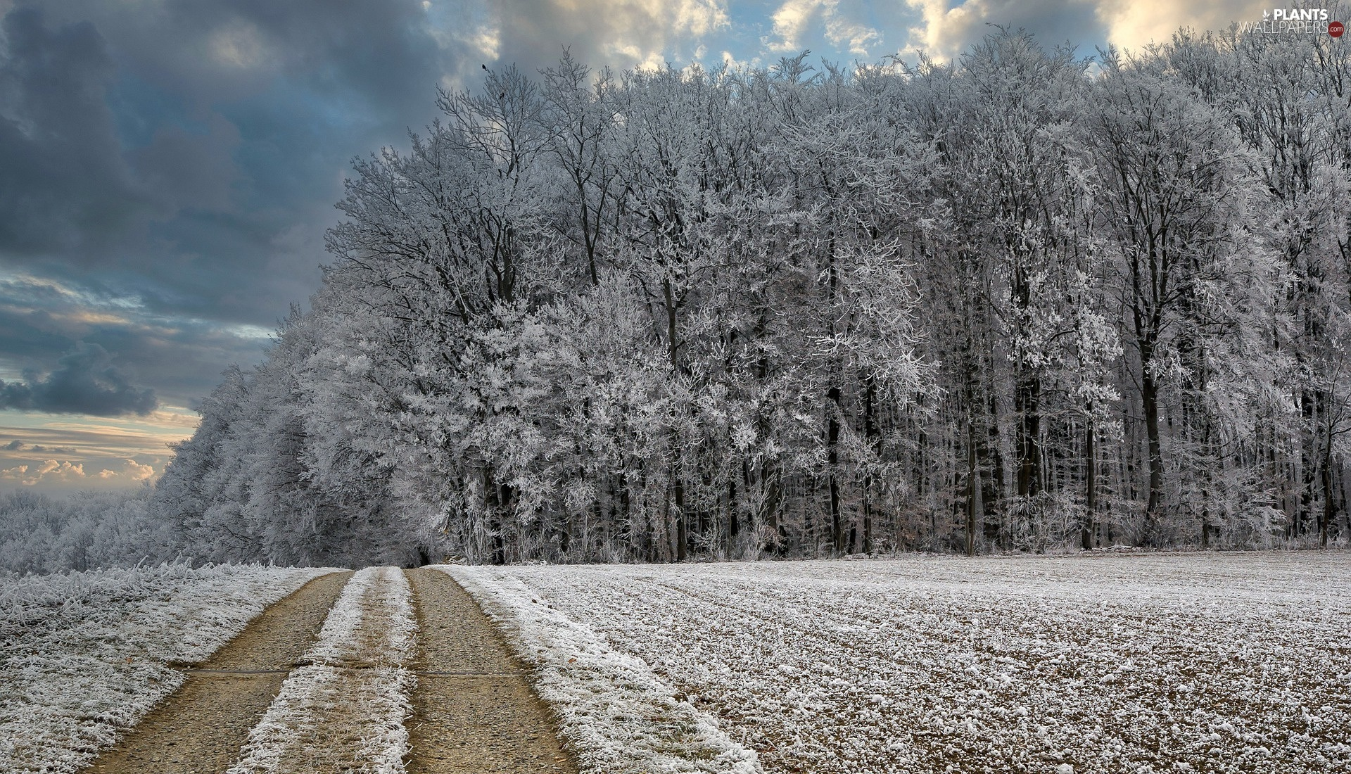 viewes, forest, Way, trees, winter, Field, White frost