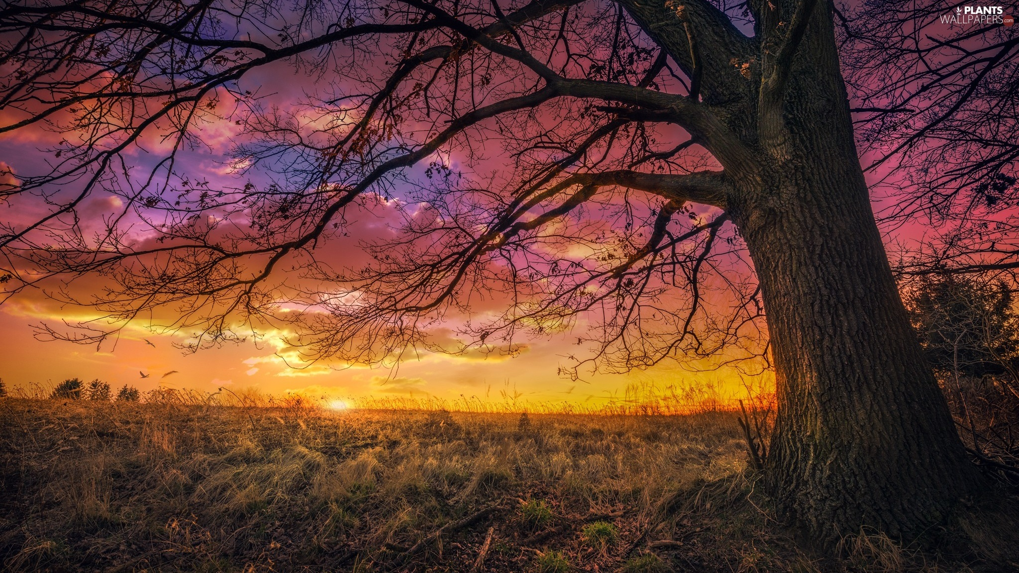 trees, grass, Great Sunsets, clouds