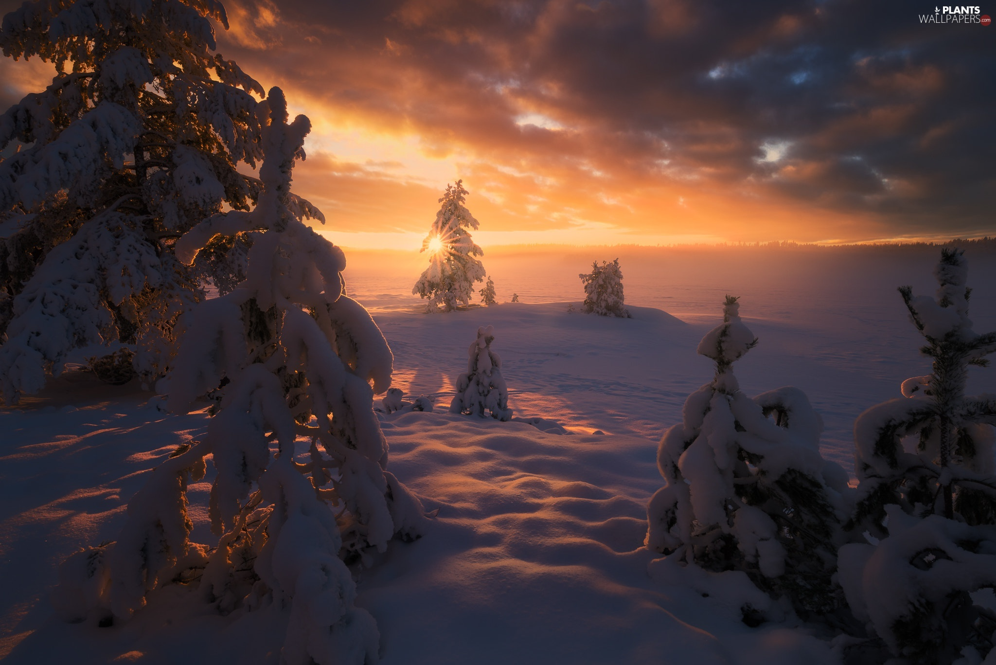 Great Sunsets, winter, viewes, snowy, trees, Ringerike Municipality, Norway, lake