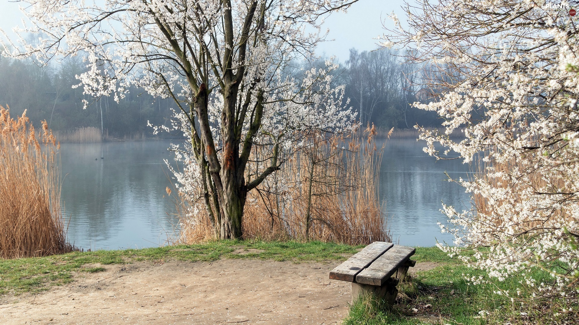 flourishing, trees, Bench, viewes, grass, River, Spring, high