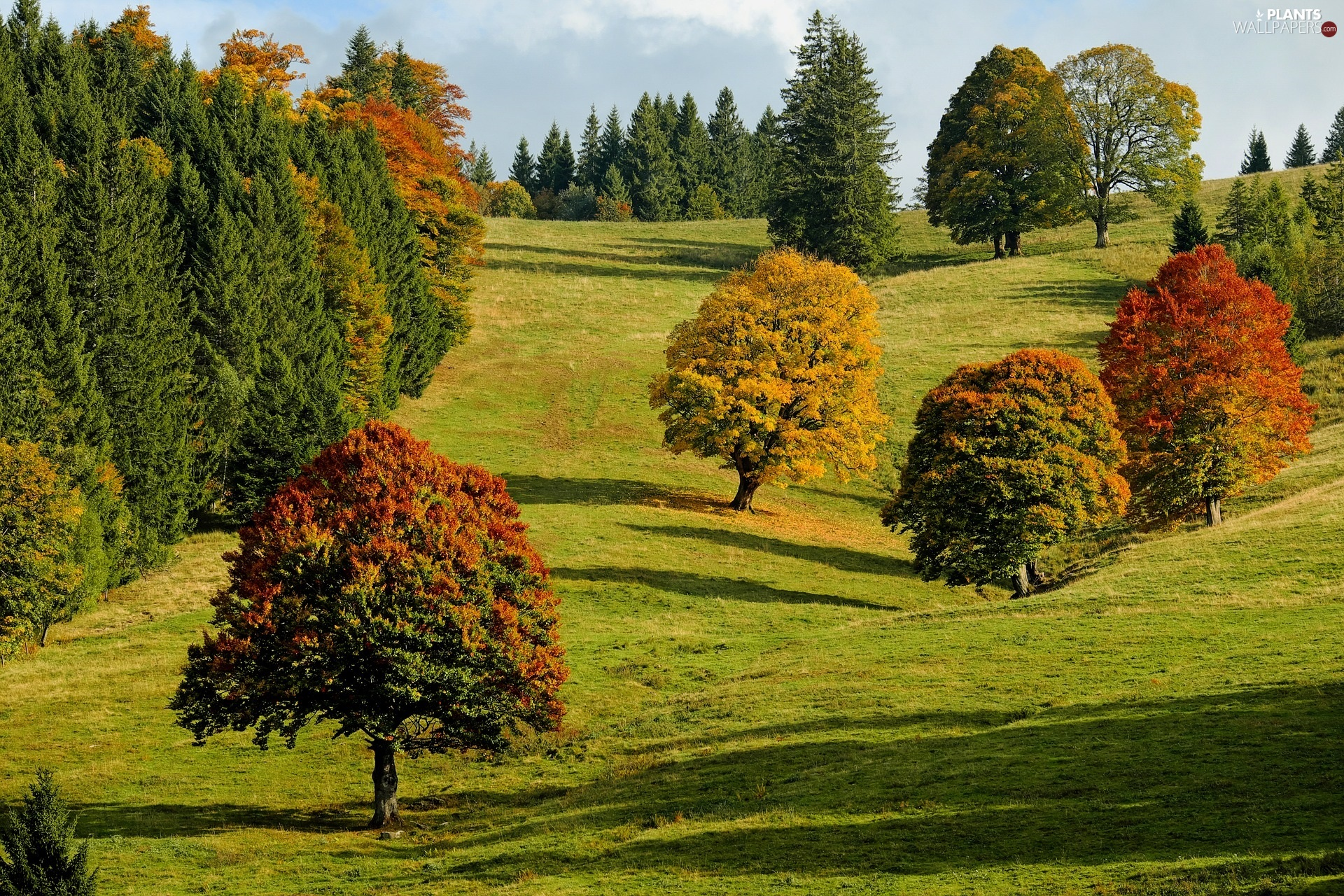 viewes, Hill, color, trees, autumn