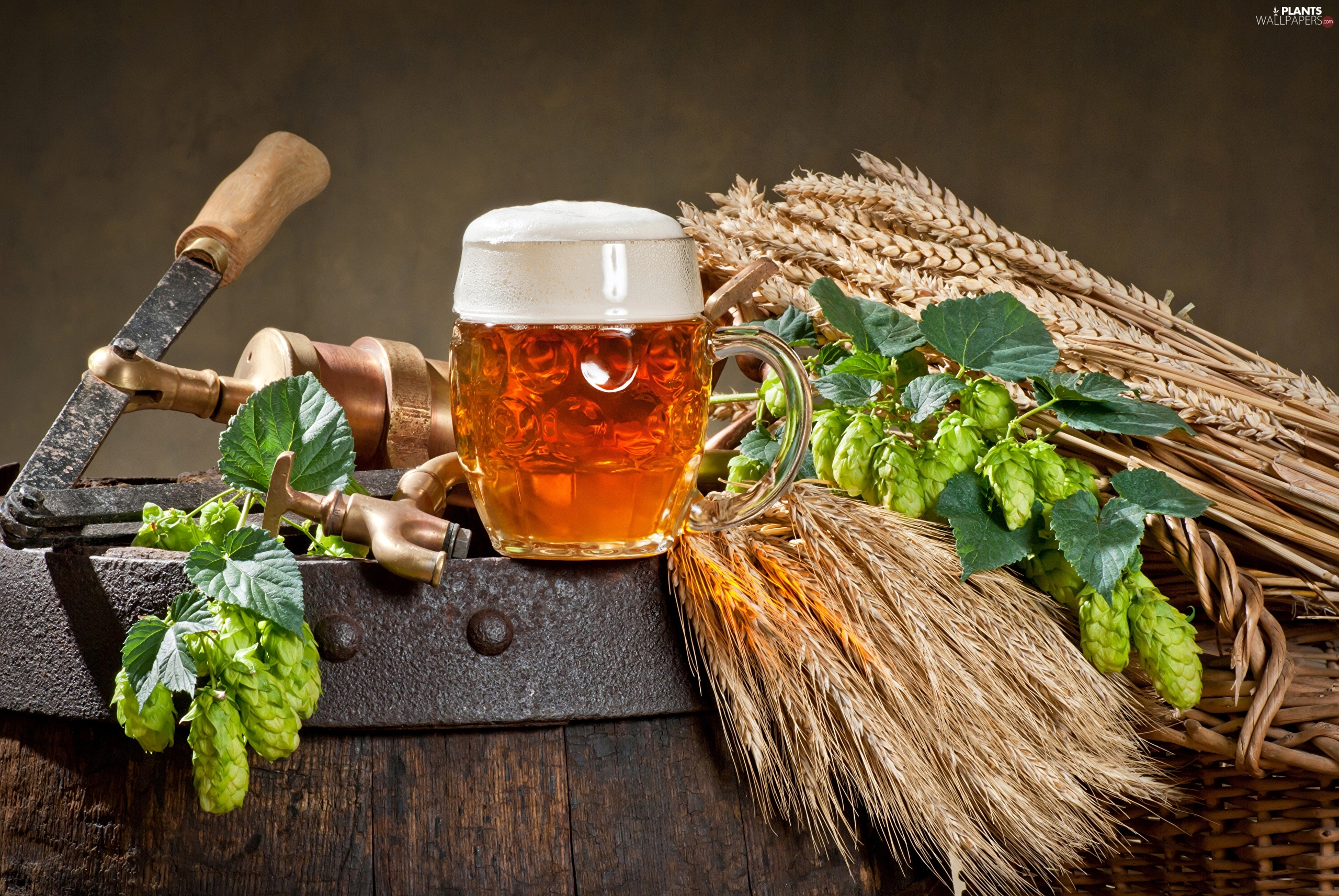 mug, composition, hop, corn, barrel, Beer