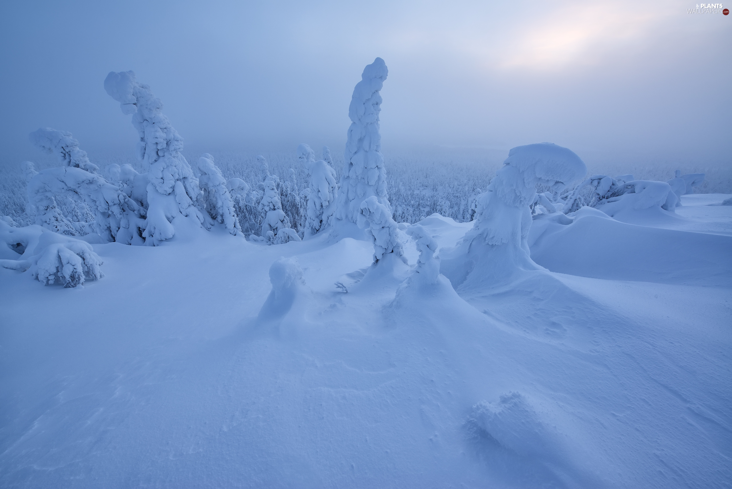 Snowy, Finland, viewes, Lapland, winter, trees, sun