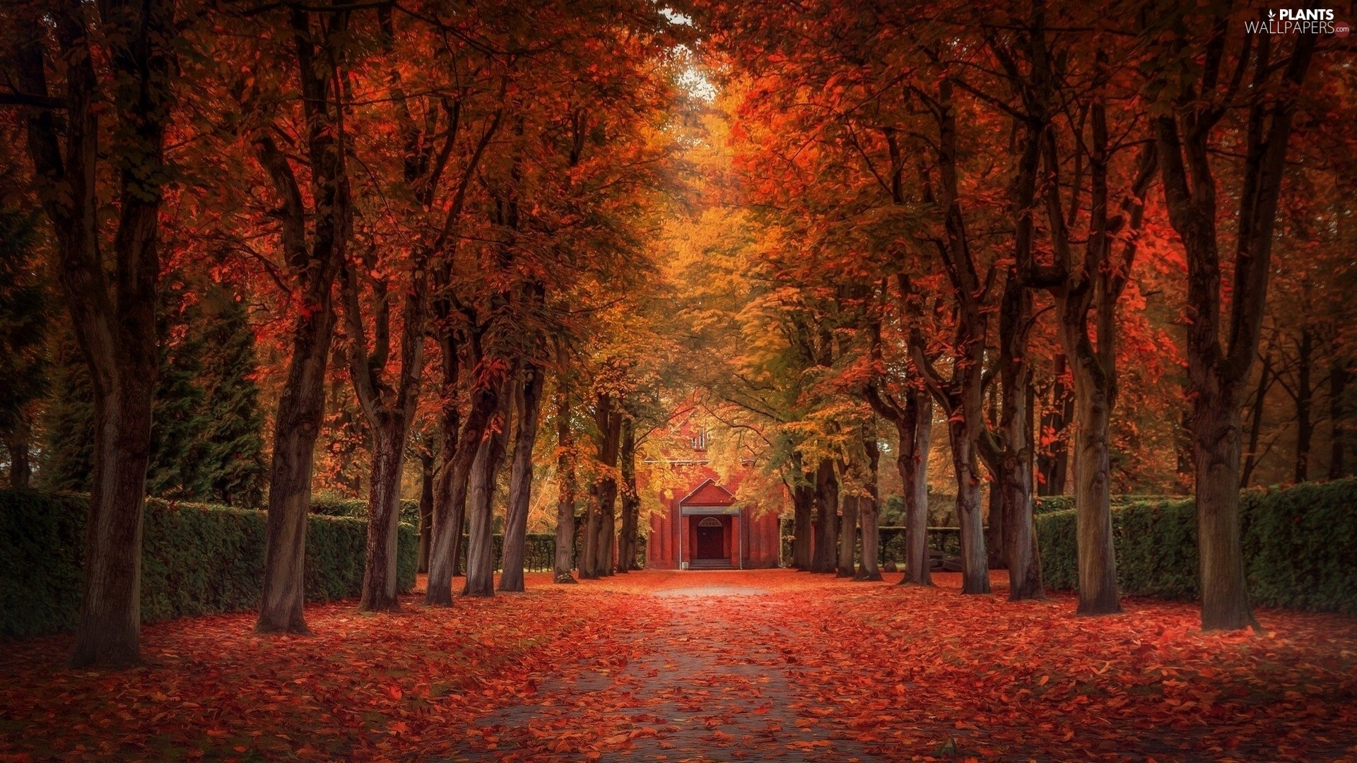 trees, Park, autumn, Leaf, viewes, alley